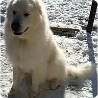 Adopt A Pet :: Cola - Minneapolis, MN
