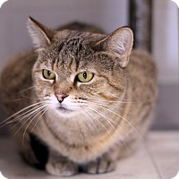 Adopt A Pet :: Cajun Queen - Chicago, IL