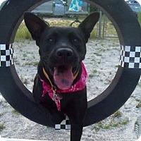 Adopt A Pet :: Grey - Marietta, GA