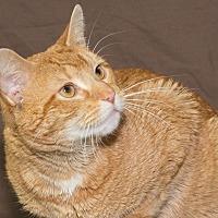 Adopt A Pet :: Marco - Elmwood Park, NJ