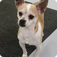 Adopt A Pet :: Carmel - Muskegon, MI