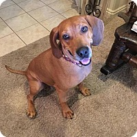 Adopt A Pet :: ROSIE - Hurricane, UT