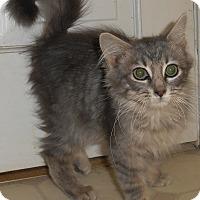 Adopt A Pet :: Bettina - Chattanooga, TN