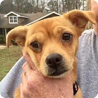 Adopt A Pet :: Penny wonderful companion doggie - Rowayton, CT