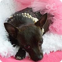Adopt A Pet :: Minnie - Westport, CT