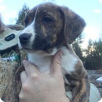 Adopt A Pet :: Mya - Plainville, CT