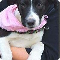 Adopt A Pet :: Jasmine - Orlando, FL