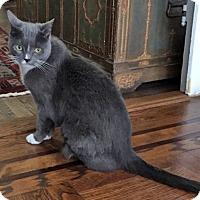 Adopt A Pet :: Betty the Beautiful NEEDS URGENT FOSTER - Brooklyn, NY