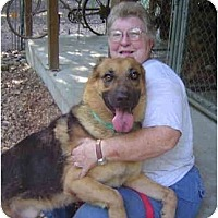 Adopt A Pet :: Little Samson - Pike Road, AL
