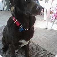 Adopt A Pet :: Brady - Fort Hunter, NY