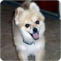 Adopt A Pet :: Hennesy - Washington, NC