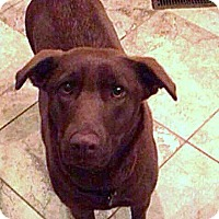 Adopt A Pet :: Allie - Somers, CT
