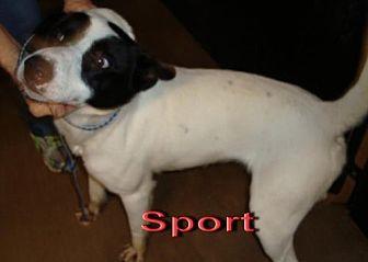 Terrier (Unknown Type, Medium) Mix Dog for adoption in Coleman, Texas - Sport