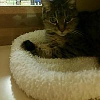 Adopt A Pet :: Jolene - Texarkana, TX