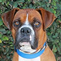 Adopt A Pet :: Elvis - Huntington Beach, CA