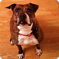 Adopt A Pet :: Pearl - Clarksville, TN