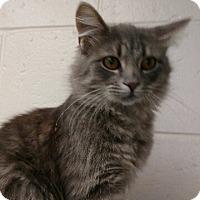Adopt A Pet :: Stallone - New Bern, NC