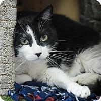 Adopt A Pet :: Caushey - Chico, CA