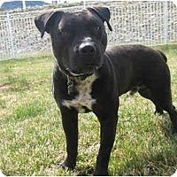 Adopt A Pet :: Bugsy - Encino, CA