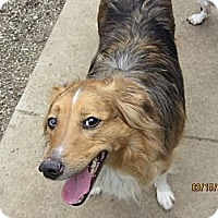 Adopt A Pet :: Shadow - Richfield, OH