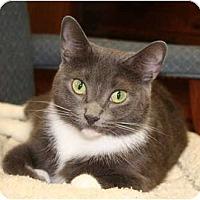 Adopt A Pet :: Vicky - Naples, FL