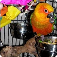 Adopt A Pet :: Harley - Salt Lake City, UT