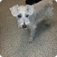 Adopt A Pet :: Beemer - Laurel, MD