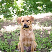 Adopt A Pet :: Mr. Bean - Lewisville, IN