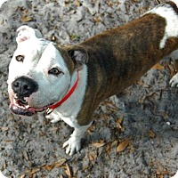 Adopt A Pet :: Faina - Bradenton, FL
