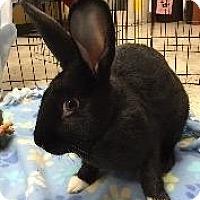 Adopt A Pet :: Poco - Woburn, MA
