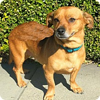 Adopt A Pet :: Millie - Campbell, CA