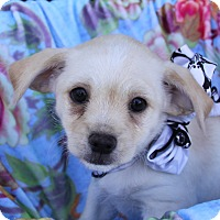 Adopt A Pet :: FLORA - Newport Beach, CA