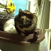 Adopt A Pet :: Tonka - bloomfield, NJ