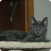 Adopt A Pet :: Gotham - Grand Rapids, MI