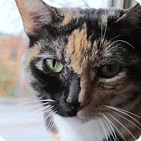 Adopt A Pet :: Nina - Prescott, AZ
