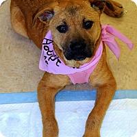 Adopt A Pet :: Sonja - Shelter Island, NY