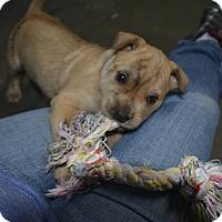 Adopt A Pet :: Holden - Meridian, ID