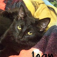 Adopt A Pet :: Joan - Covington, KY