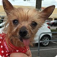 Adopt A Pet :: Riva - geneva, FL