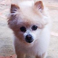 Adopt A Pet :: Patrick - Norman, OK