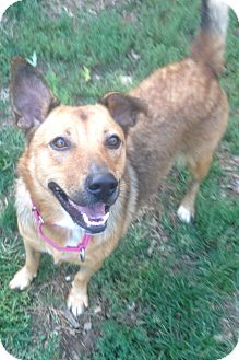 Shepherd (Unknown Type) Mix Dog for adoption in South Park, Pennsylvania - Penny