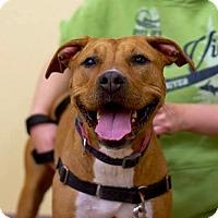 Adopt A Pet :: Samoa - Troy, MI