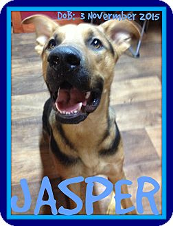 German Shepherd Dog Mix Dog for adoption in Jersey City, New Jersey - JASPER