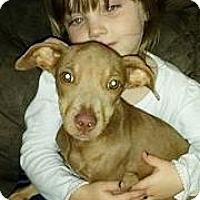 Adopt A Pet :: Aria  meet me 1/6 - Manchester, CT