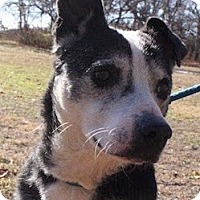 Terrier (Unknown Type, Medium) Mix Dog for adoption in Tahlequah, Oklahoma - Oliver