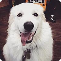 Adopt A Pet :: Biscuit - Memphis, TN