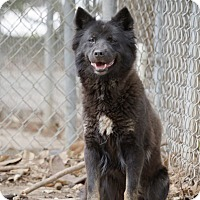 Adopt A Pet :: Cloudy - Key Biscayne, FL