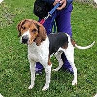 Adopt A Pet :: Cordell - Lisbon, OH