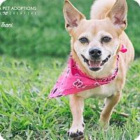Adopt A Pet :: Traci - San Leon, TX