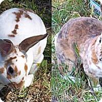 Adopt A Pet :: Sugar - Santee, CA